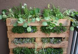 making an herb garden out of old pallets