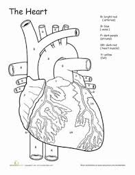 be9dcf281ae114994c2b42719be611de th grade worksheets coloring worksheets 25 best ideas about circulatory system on pinterest heart on connectives worksheet for grade 5