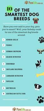 Dog Breed Compatibility Chart Dogs Informer Dogsinformer On Pinterest