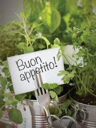 grow your own kitchen countertop herb garden