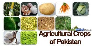 b com part essay no cash crops of lahore education b com part 1 essay no 6 cash crops of