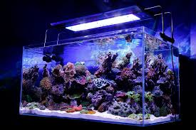 reef tank led lighting uk lilianduval