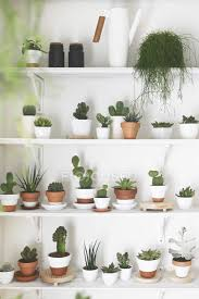 collection of cacti and succulents on shelves stock photo