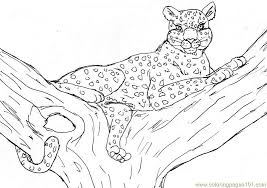 Small Picture Leopard Coloring Page Free Cheetah Coloring Pages