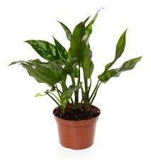 plants for windowless office. offices with windows are a rarity in some work buildings windowless and cubicles becoming plants for office