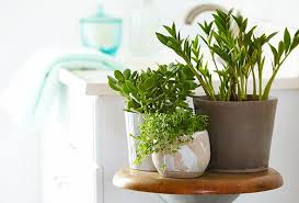 The 6 Best Plants for Your Bathroom