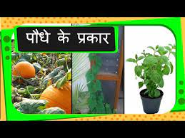 science types of plants hindi you