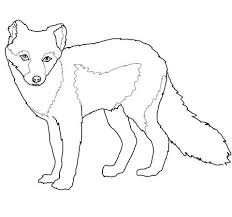 Premium Arctic Fox Coloring Page Q4455 Cheap Animal Jam Arctic Fox