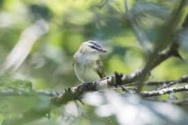 Rhode Island Providence Audubon Of Society Adventure Birding qYrSX6Y