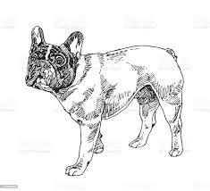 Boston Terrier Dog Vector Stock ...