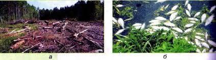 Изменения в природе связанные с деятельностью человека  Негативное влияние человека на природу а уничтожение лесов б гибель рыбы