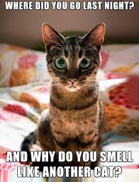 cute kittens quotes for kids. Contemporary Quotes Follow Gwylio0148 Or Visit Httpgwylio For More Diykidspets Videos Inside Cute Kittens Quotes For Kids