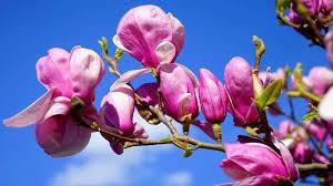 Beautiful spring flowers in blue sky (HD1080p) - YouTube