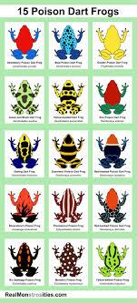 Poison Dart Frogs Id Chart Imgur