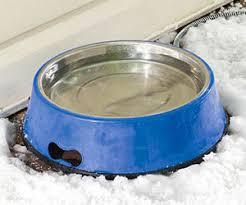 Heated Pet Bowl. Cat Tongue Grooming Brush The Green Head Water Bowl For Cats - HD Wallpaper Utsprokids.Org