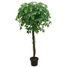 <b>Растение</b> BontiLand Зелень круглый год 412293 Душица ...