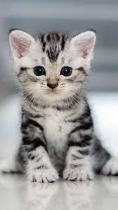 Cute Cat Wallpaper - NawPic
