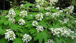 Shade Loving Plants  Make The Most Out Of Your Problem Areas In Climbing Plants That Like Shade