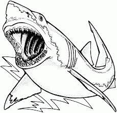 Coloriage Gratuit De Requin 1001 Animaux Coloriage De Requin Tigre Pour Colorier L