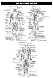 Kinesiology Muscle Chart 118 Best Kinesiology Images Massage Therapy Acupressure