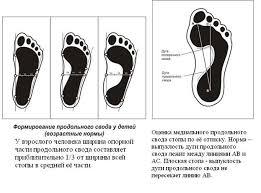 Реферат Осанка и плоскостопие ru Вот почему в настоящее время придается такое большое значение правильной организации физического воспитания детей всех возрастов