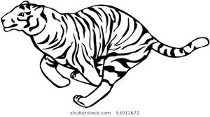 running tiger clipart black and white. Vector Image Of Running Tiger Inside Clipart Black And White