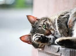 Ich habe mir nichts gedacht und bin davon ausgegangen dass es. Hilfe Bei Wurmbefall Bei Katzen Zooroyal Magazin