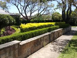 Small Picture Hedge Plants How to Plant a Hedge Tips and Guides