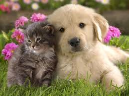 puppies and kittens wallpaper. Wonderful Wallpaper Cute Kittens And Puppies Wallpaper  Animal Wallpapers 2066  To A