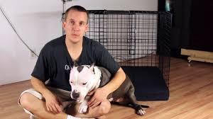 homemade dog kennels 2. Homemade Dog Kennels 2