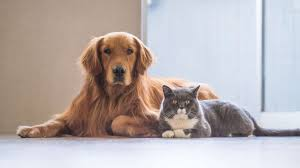 cats and dogs playing. Wonderful And IStock With Cats And Dogs Playing