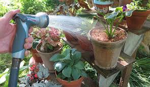grow potted plants outdoors