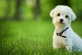 「dog」的圖片搜尋結果