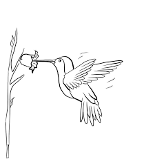 Small Picture Emejing Hummingbird Coloring Pages Photos Amazing Printable