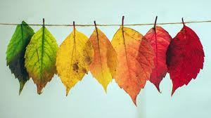 Resultado de imagen de otoño imagenes