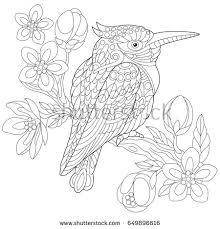 Small Picture Coloring Page Australian Kookaburra Kingfisher Bird Stock Vector