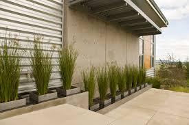 Perfect Modern Landscape Plants
