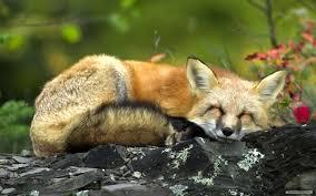 Best Of Free Cute Animal Desktop ...