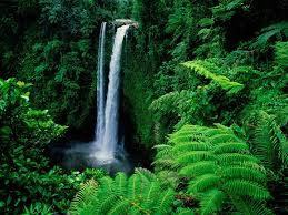 rainforest images rainforest hd wallpaper and background photos