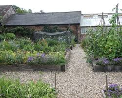 Kitchen Garden Trough Allium Sphaerocephalon The Dahlia Papers