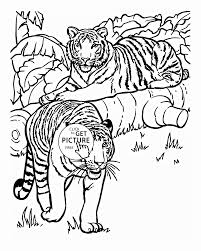 Animal Tigers Animal Coloring Page For