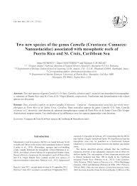 100 Etymology Of Resume A New Species Of Emballonura