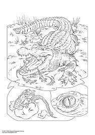 Kleurplaat Krokodil Afb 3053 Images