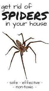 how to kill spiders in house. Gallery Of 29 Beautiful Spray To Kill Spiders In House Trending How Small Home Decoration Ideas 8 S