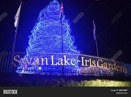 Swan Lake Sumter Sc Christmas Lights Sumter Sc Swan Lake Image Photo Free Trial Bigstock
