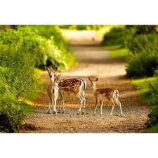 deer symbol of longevity health painting vastu feng s canvas print