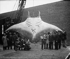 35 Enormous Animals That Are Even Bigger In Person Than Most