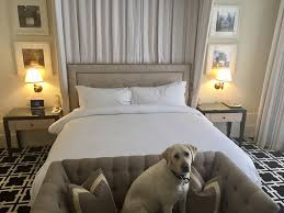 deluxe king downtown palo alto boutique hotel king bed pet friendly hotel