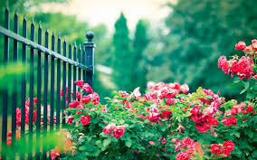 Small Picture Garden Design With Flowers In Summer Xpx Wallpapers Hd Best