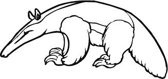 anteater animal coloring pages